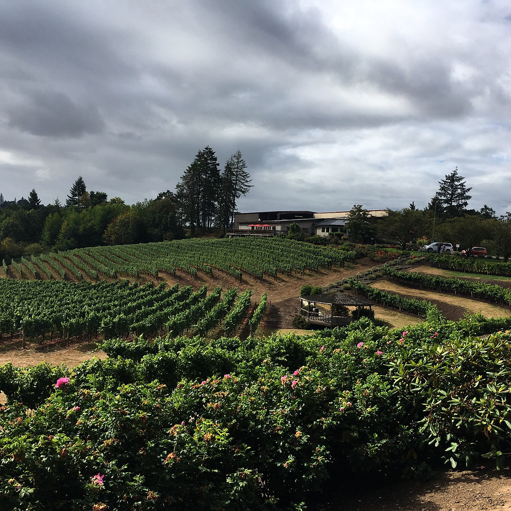 Vineyards in Oregon Wine Country