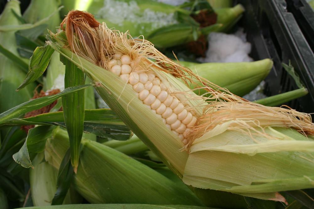 Fresh ear of corn