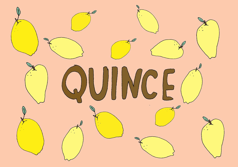 whimsical Quince illustration, Lila Volkas
