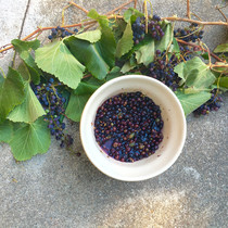 Rosemary grape shrub