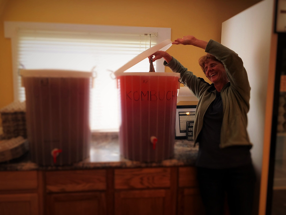 2 5-gallon brewers for Kombucha, with owner showing a SCOBY