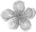 PlumBlossom.png