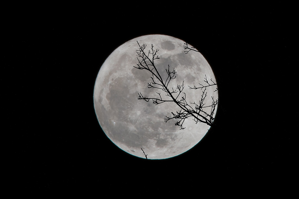 A full moon against a cloudless black sky with a bare tree in front shadow at the front of the image. This photograph is courtesy of David Dibert on Unsplash.