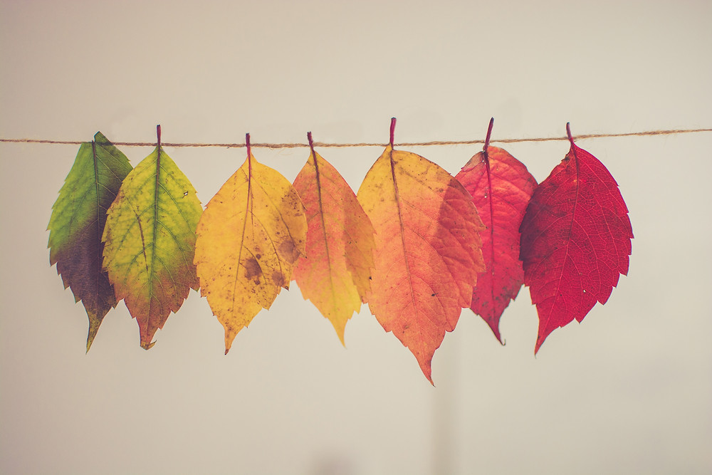 Photograph of seven leaves ranging in colour from green to red all hanging from a string against a white background. Photo by Chris Lawton on Unsplash