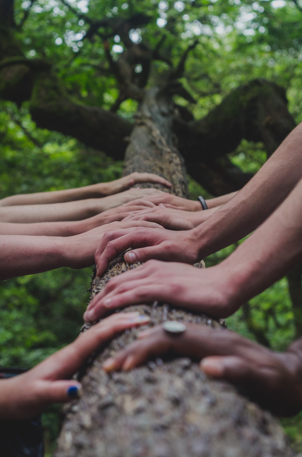 Photograph of multiple pairs of hands resting on a tree trunk which stretches from the foreground of the photograph backwards, with the tree's canopy at the top of the image. Photo is courtesy of Shane Rounce on Unsplash