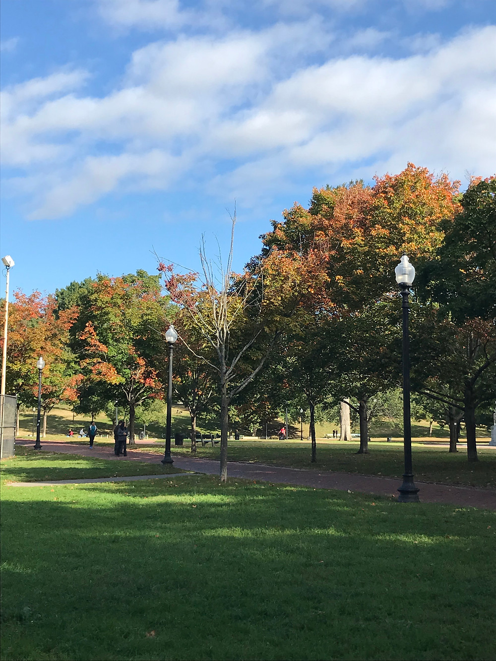 A photograph of Autumnal trees on the edge of Boston Common.