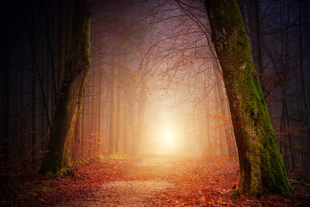 Photograph of a sunrise at the end of a forest path through the trees. Photo is courtesy of Johannes Plenio on Unsplash.