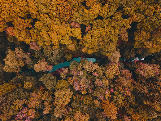 An aerial photograph of the trees and water of Kielder forest in Northumberland. Photograph by Dan Smedley via Unsplash.