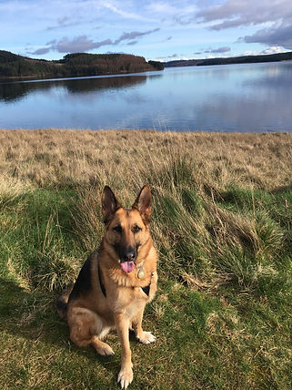 Kali, a femae blacck and tan German Shepherd dog sits on the grass in front of a large body of water - Kielder Water in Northumberland, England - under a blue sky on a beauiful day.