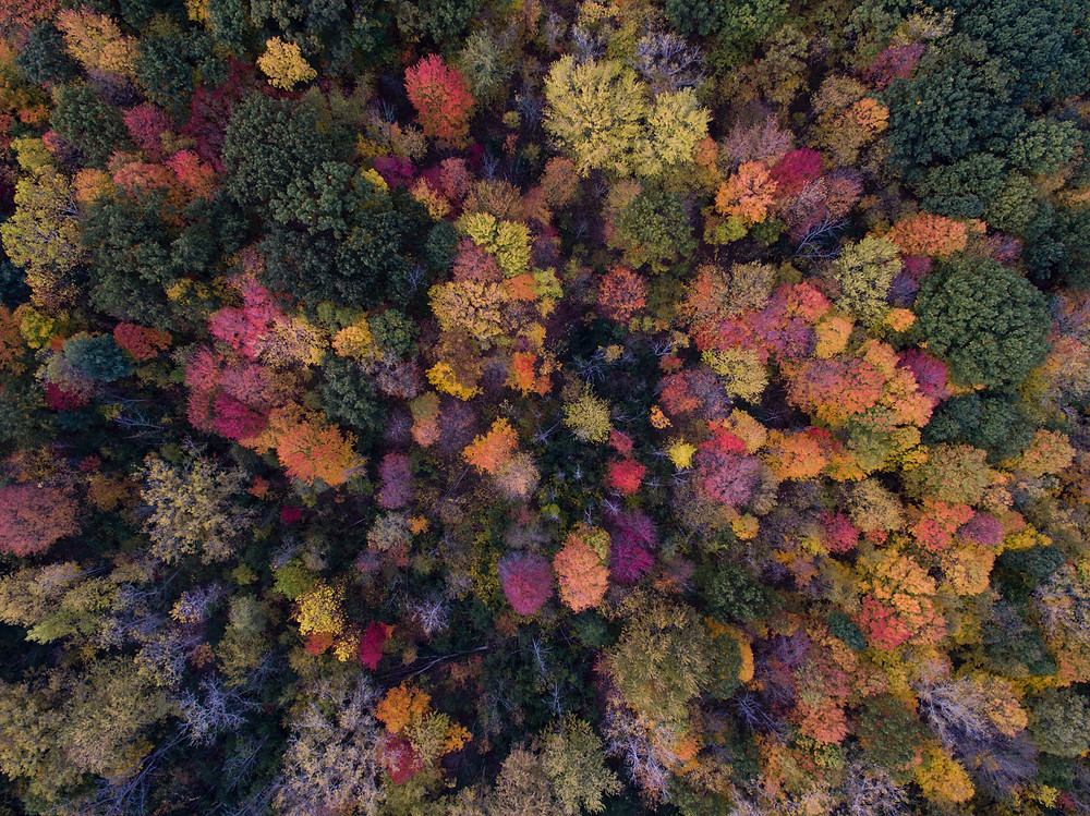An aerial shot of a colourful forest in Autumn, photo by Aaron Burden on Unsplash