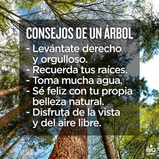 Conseils d'un arbre...