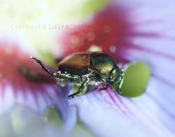 Pollen Bead