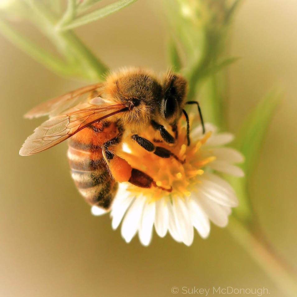 Bee Hug