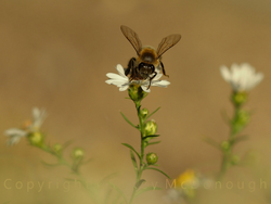 A Bee's Choice