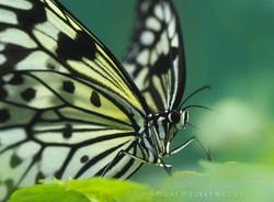 I Spy Butterfly