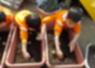 栽培活動:ジャガイモの苗植え.JPG