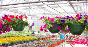 Introducing: Blooming Hope Greenhouse