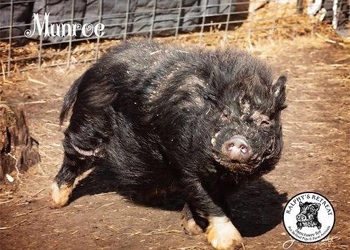 Pig Sponsorship