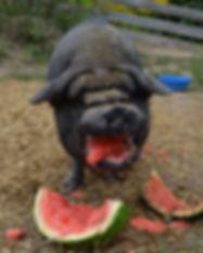 RogWatermelon.JPG