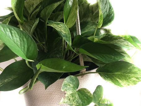Make your Houseplant Lifestyle Even More Sustainable