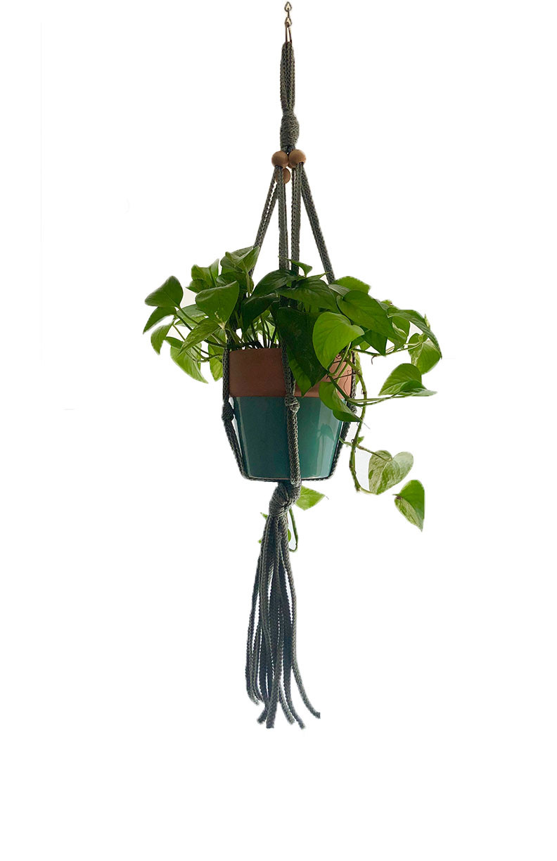 hanging pothos