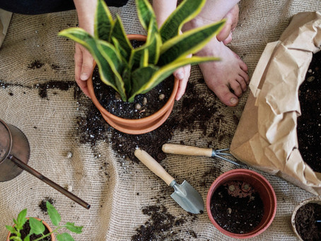 The Dirt on Repotting Plants