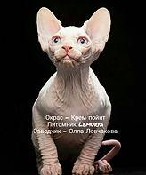 эльф, двэльф, бамбино, сфинкс, питомник эльфов, питомник giving joy, Giving Joy, кошка породы эльф, кошка породы дфэльф, кошка породы бамбино, эльфы, котята сфинксы, котята эльфы, котята бамбино, котята двэльфы, питомник сфинксов, канадский сфинкс, elf, dwelf, dvelf, bambino, sphynx, giving joy cattery, kittens, гивинг джой,  Калининград