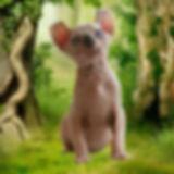 эльф, двэльф, бамбино, сфинкс, питомник эльфов, питомник giving joy, Giving Joy, кошка породы эльф, кошка породы дфэльф, кошка породы бамбино, эльфы, котята сфинксы, котята эльфы, котята бамбино, котята двэльфы, питомник сфинксов, канадский сфинкс, elf, dwelf, dvelf, bambino, sphynx, giving joy cattery, kittens