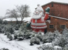 Weihnachtsbäume bei Dummeyer Heidmann