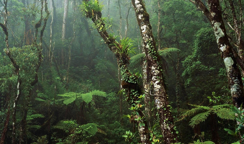 Preservação da Amazônia