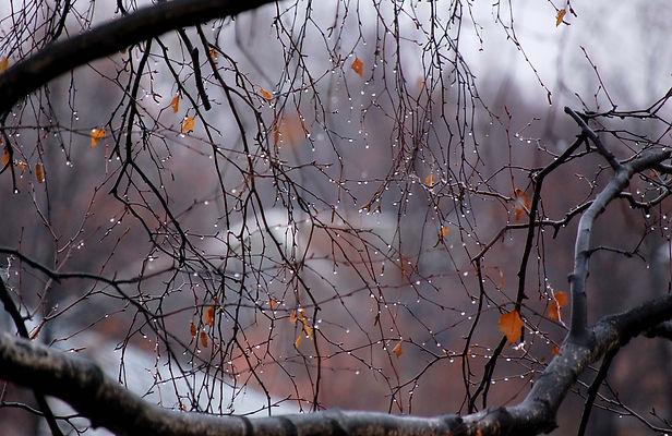 ноябрь, осень, голые деревья, желтая листва, роса
