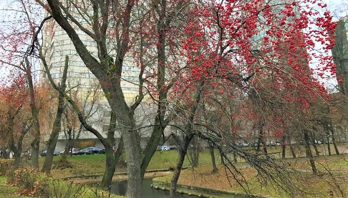 осень, красные ягоды, парк