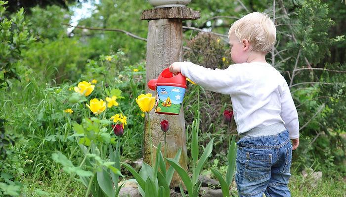 мальчик, лейка, мальчик поливает цветы, ребенок, цветы, тюльпаы, ребенок поливает цветы