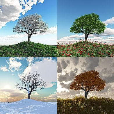 дерево, лето, зима, весна, осень, времена года