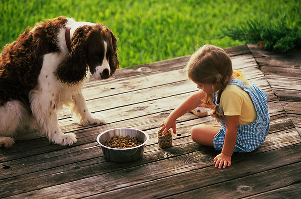 пес, собака, девочка, девочка кормит собаку