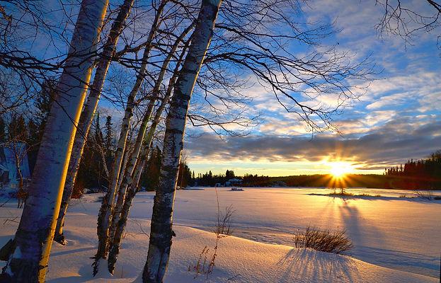 зима, снег, закат, береза