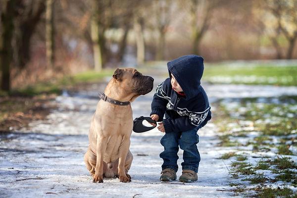 собака, мальчик, питомец