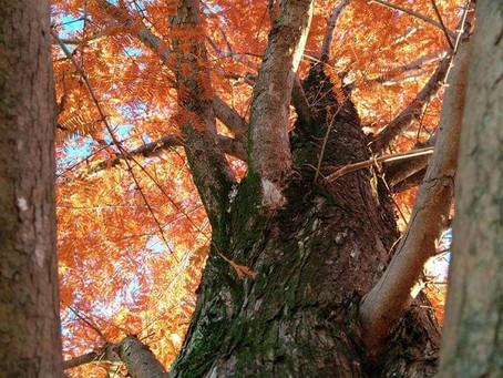 藤枝の麗しき人々