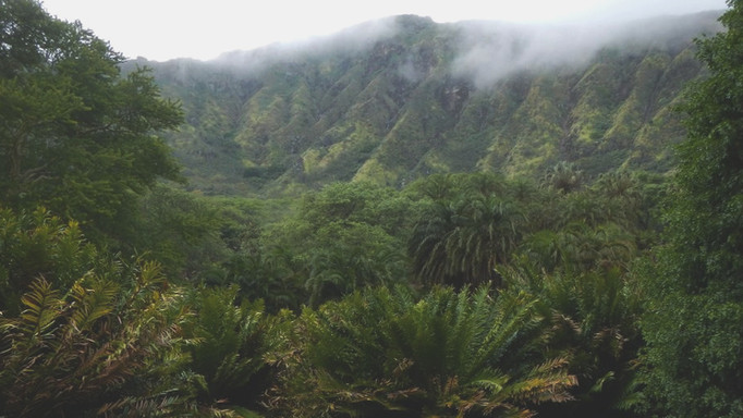 mist rolling in palm section
