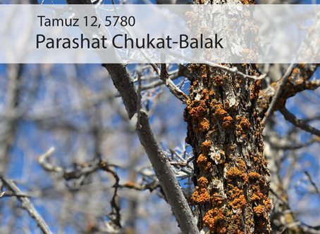 AUDIO ESSAY: Torah for the Earth - Chukat-Balak