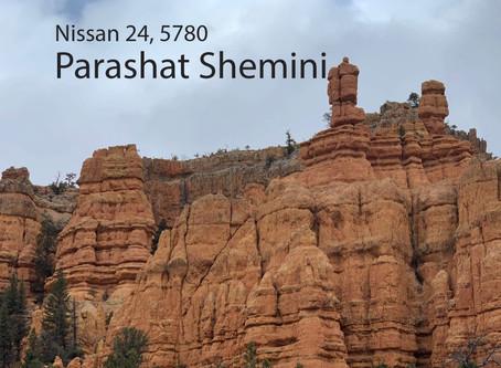 AUDIO ESSAY: Torah for the Earth - Shemini