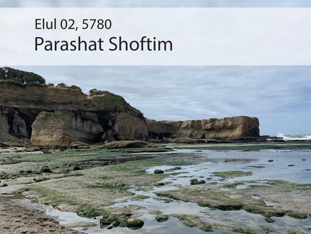 AUDIO ESSAY: Torah for the Earth - Shoftim