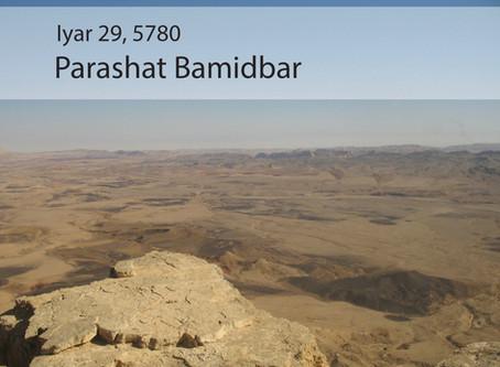 AUDIO ESSAY: Torah for the Earth - Bamidbar