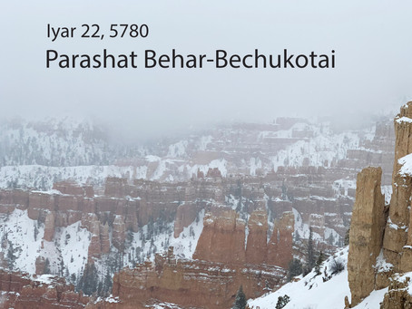 AUDIO ESSAY: Torah for the Earth - Behar-Bechukotai