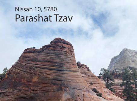 AUDIO ESSAY: Torah for the Earth - Tzav