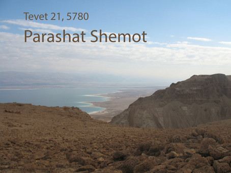 AUDIO ESSAY: Torah for the Earth - Shemot