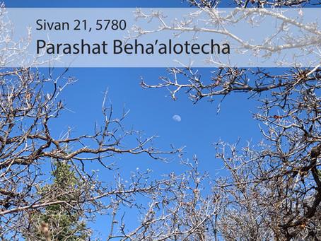 AUDIO ESSAY: Torah for the Earth - Beha'alotecha