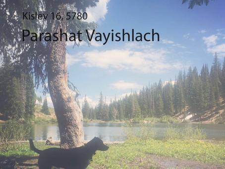 AUDIO ESSAY: Torah for the Earth - Vayishlach