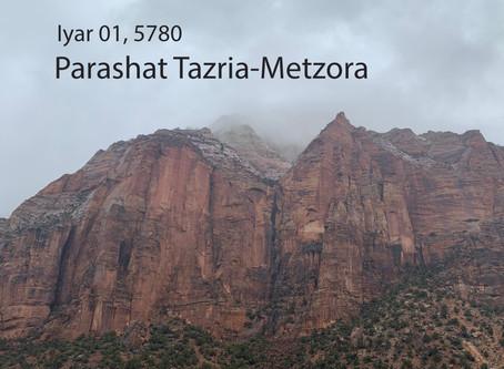 AUDIO ESSAY: Torah for the Earth - Tazria-Metzora
