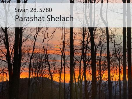 AUDIO ESSAY: Torah for the Earth - Shelach